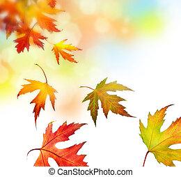 feuilles, automne, beau