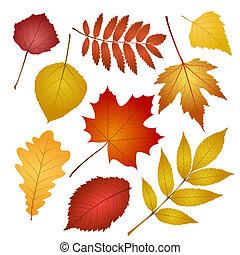 feuilles automne, blanc, isolé, fond