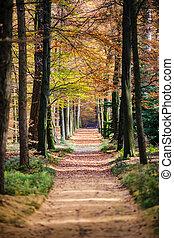 feuilles automne, bois, forêt, coloré