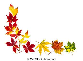 feuilles automne, cadre, coloré