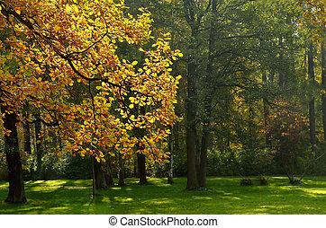 feuilles automne, chêne