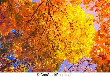 feuilles automne, chutes