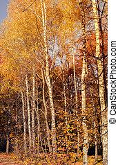 feuilles automne, ciel, fond