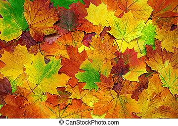 feuilles automne, coloré, fond