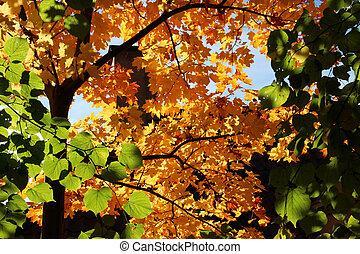feuilles automne, coloré