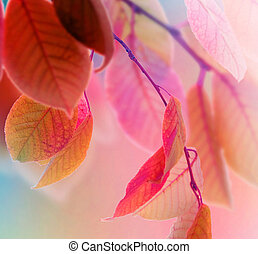 feuilles automne, conception