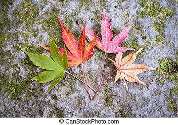 feuilles automne, cycle vie
