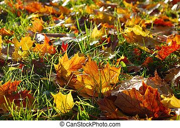 feuilles automne, dans, herbe