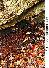 feuilles automne, dans, lac
