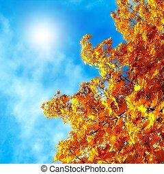 feuilles automne, de, érable, contre, les, ciel bleu