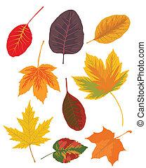 feuilles automne, ensemble