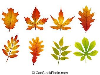feuilles, automne, ensemble