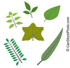 feuilles automne, ensemble, coloré