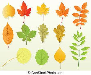 feuilles automne, ensemble, vecteur, fond