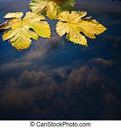 feuilles automne, et, eau, résumé, fond