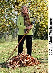 feuilles automne, femme, ratisser, haut