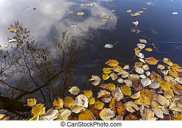 feuilles automne, flotter eau, à, réflexions