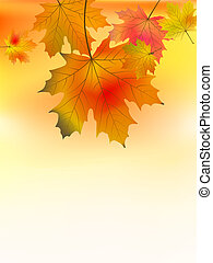 feuilles automne, fond, érable