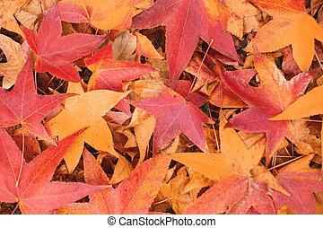 feuilles, automne, fond, érable