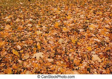 feuilles, automne, fond, coloré, automne, texture.