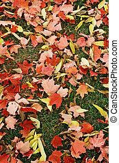 feuilles automne, fond jaune, rouges