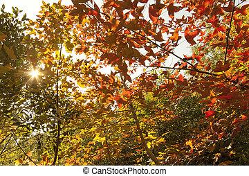 feuilles automne, forêt, fond
