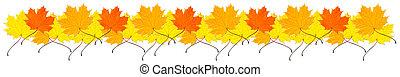 feuilles automne, frontière, érable