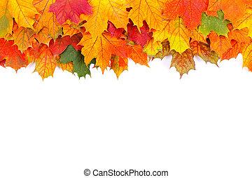 feuilles, automne, frontière