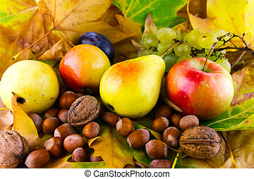 feuilles, automne, fruits