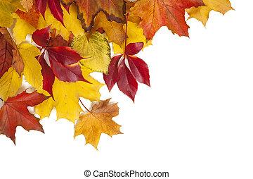 feuilles automne, groupe, coloré