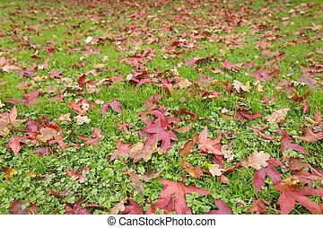 feuilles automne, herbe, fond, automne