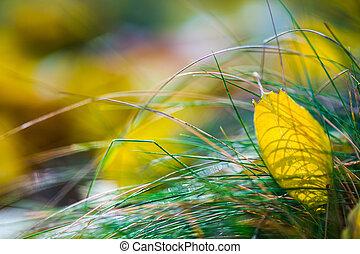feuilles automne, herbe, jaune
