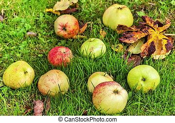 feuilles automne, herbe, pommes