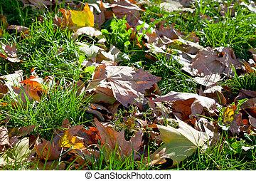 feuilles automne, herbe, vert
