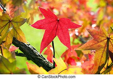feuilles, automne