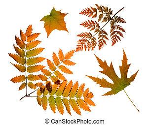 feuilles automne, isolé
