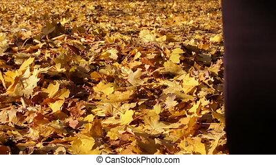 feuilles automne, jaune, forest., conversation, girl, moquette, heureux