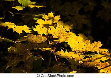 feuilles automne, -, jaune