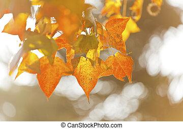 feuilles automne, lumière soleil, sous