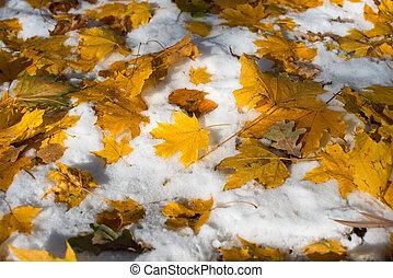 feuilles automne, neige