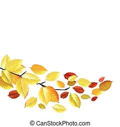 feuilles automne, octobre