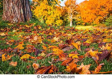 feuilles automne, parc, coloré