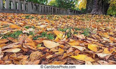 feuilles automne, parc