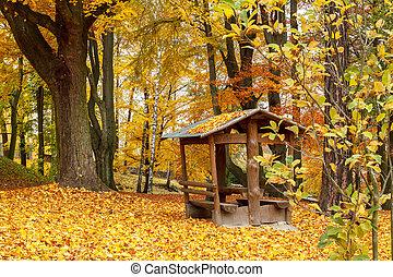 feuilles automne, parc, jaune, terrestre