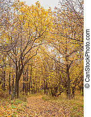 feuilles automne, park., automnal, arbres