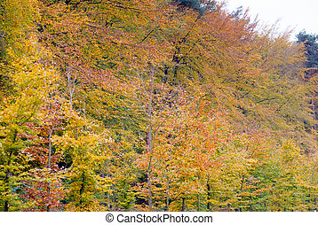 feuilles automne, park., coloré