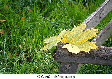 feuilles automne, park.