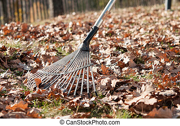 feuilles automne, râteau, parc, nettoyage