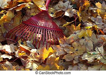 feuilles, automne, râteau
