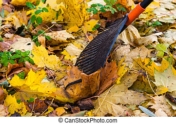 feuilles automne, râteau, saisir, jaune